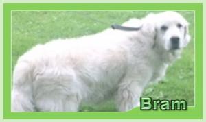 Bram2