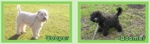 CooperenBoomer
