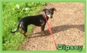 Dipsey