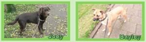 JoeyenBayley
