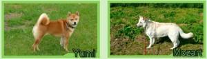 YumiEnMozart